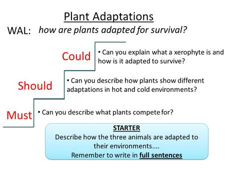 Plant Adaptations Could Should Must WAL: