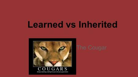 Learned vs Inherited The Cougar.