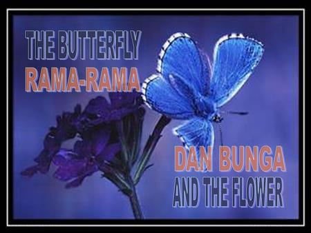 THE BUTTERFLY RAMA-RAMA DAN BUNGA AND THE FLOWER.