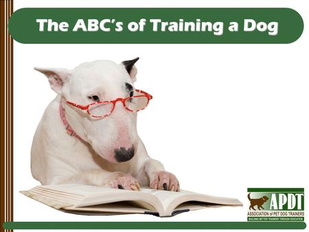 The ABC's of Training a Dog. Every Day Counts Every moment that you spend with your dog is an opportunity to teach him something (good or bad).