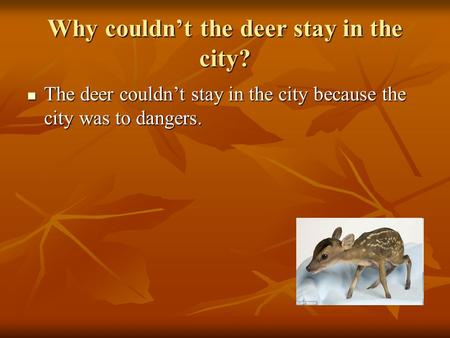 Why couldn't the deer stay in the city? The deer couldn't stay in the city because the city was to dangers. The deer couldn't stay in the city because.