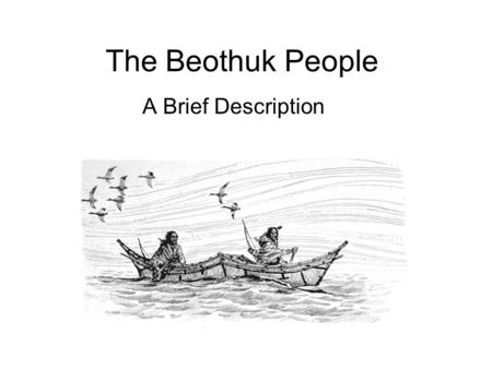 The Beothuk People A Brief Description. Who Were They? Aboriginal people Hunter-gatherers Probably numbered less than a thousand people at the time of.