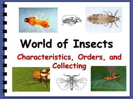 World of Insects Characteristics, Orders, and Collecting.