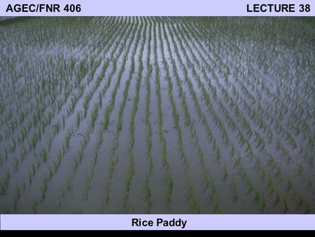 AGEC/FNR 406 LECTURE 38 Rice Paddy. World Food Production Major links between food production and the environment: 1. Food production relies on good quality.
