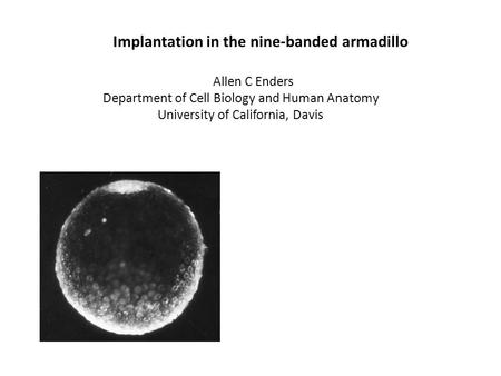 Implantation in the nine-banded armadillo Allen C Enders Department of Cell Biology and Human Anatomy University of California, Davis.