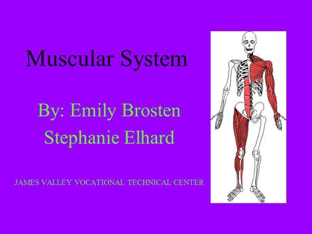 Muscular System By: Emily Brosten Stephanie Elhard JAMES VALLEY VOCATIONAL TECHNICAL CENTER.