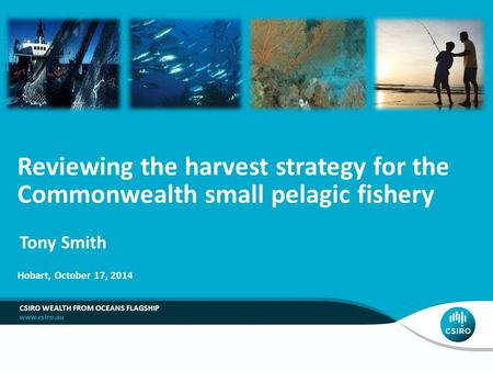 CSIRO WEALTH FROM OCEANS FLAGSHIP Reviewing the harvest strategy for the Commonwealth small pelagic fishery Tony Smith Hobart, October 17, 2014.