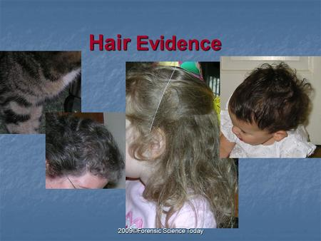 2009©Forensic Science Today Hair Evidence. 2009©Forensic Science Today Parts of the Hair Medulla Cuticle Cortex Follicle Root Distal end Proximal end.