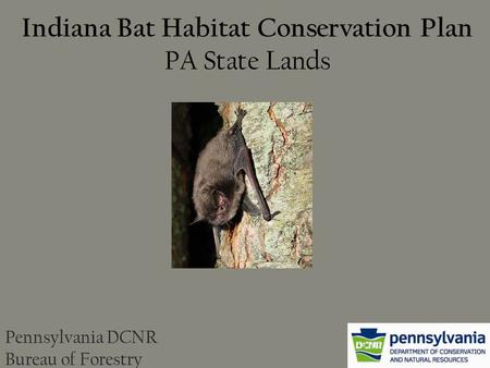 Indiana Bat Habitat Conservation Plan PA State Lands Pennsylvania DCNR Bureau of Forestry.