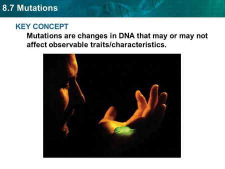 KEY CONCEPT Mutations are changes in DNA that may or may not affect observable traits/characteristics.