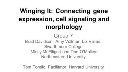 Winging It: Connecting gene expression, cell signaling and morphology Group 7 Brad Davidson, Amy Vollmer, Liz Vallen: Swarthmore College Missy McElligott.
