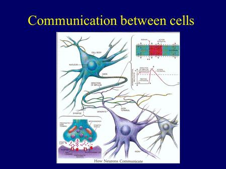 Communication between cells. R I1I1 Biology Electrical equivalent I2I2 I = I 1 + I 2 I.