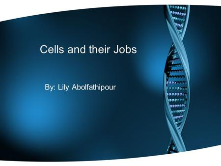Cells and their Jobs By: Lily Abolfathipour. Nucleus Nucleus controls the activity of the cell, and also contains chromosomes which are made of DNA. DNA.
