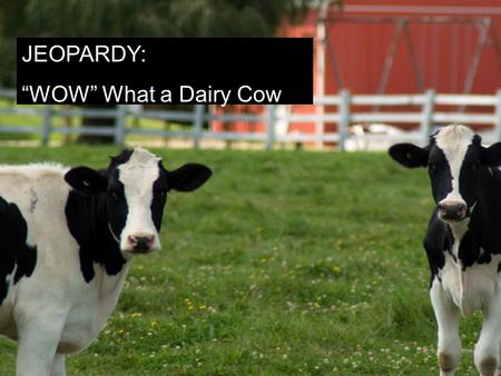 "Jeopardy Style Wow! What A Cow! JEOPARDY: ""WOW"" What a Dairy Cow."