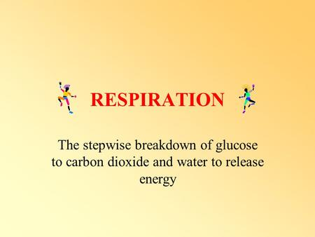 RESPIRATION The stepwise breakdown of glucose to carbon dioxide and water to release energy.