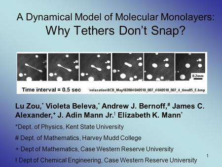 1 A Dynamical Model of Molecular Monolayers: Why Tethers Don't Snap? Lu Zou, * Violeta Beleva, * Andrew J. Bernoff, # James C. Alexander, + J. Adin Mann.