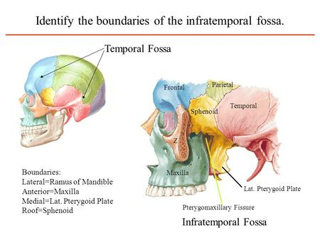 Identify the boundaries of the infratemporal fossa.
