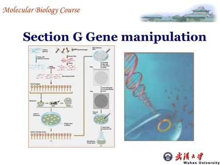 Section G Gene manipulation Molecular Biology Course.