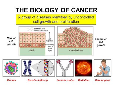 THE BIOLOGY OF CANCER A group of diseases identified by uncontrolled cell growth and proliferation VirusesGenetic make-upImmune statusRadiationCarcinogens.