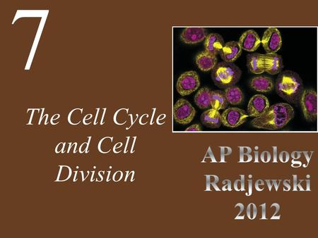 The Cell Cycle and Cell Division 7. Chapter 7 The Cell Cycle and Cell Division Key Concepts 7.2 Binary Fission and Mitosis 7.3 Cell Reproduction Control.