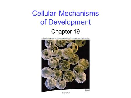Cellular Mechanisms of Development
