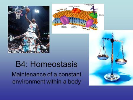 B4: Homeostasis Maintenance of a constant environment within a body.