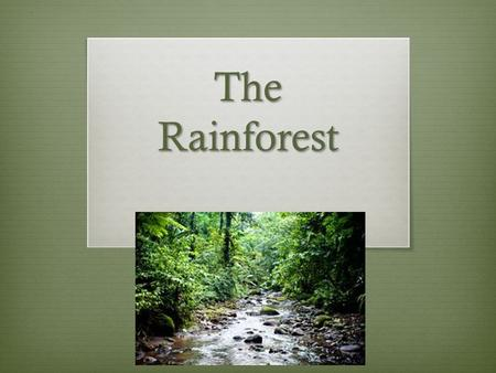The Rainforest. Why Should I Care? The rainforest is home to many different species. At least 80% of our food originated in the rainforest, such as bananas,