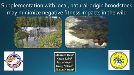 Supplementation with local, natural-origin broodstock may minimize negative fitness impacts in the wild Initial results of this study were published in.