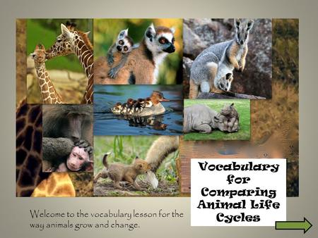 Vocabulary for Comparing Animal Life Cycles Welcome to the vocabulary lesson for the way animals grow and change.