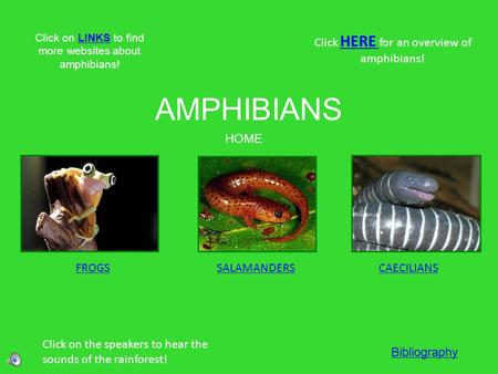 AMPHIBIANS FROGSSALAMANDERSCAECILIANS Click HERE for an overview of amphibians! HERE Click on the speakers to hear the sounds of the rainforest! HOME Click.