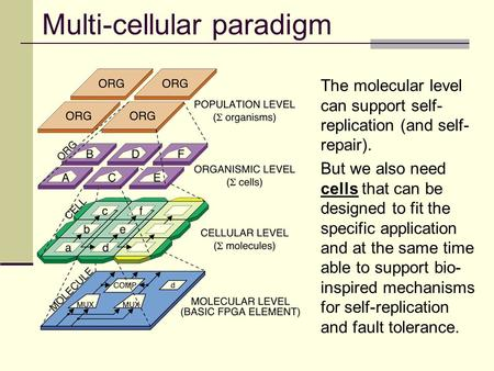 Multi-cellular paradigm The molecular level can support self- replication (and self- repair). But we also need cells that can be designed to fit the specific.