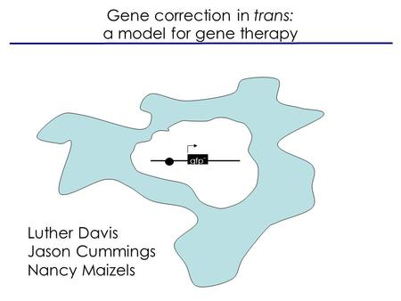 Gfp - Gene correction in trans: a model for gene therapy Luther Davis Jason Cummings Nancy Maizels.