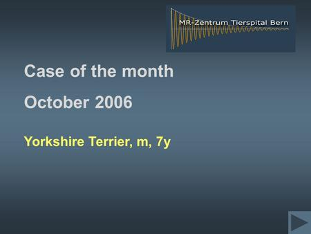 Case of the month October 2006 Yorkshire Terrier, m, 7y.