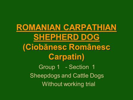 ROMANIAN CARPATHIAN SHEPHERD DOG (Ciobănesc Românesc Carpatin) Group 1- Section1 Sheepdogs and Cattle Dogs Without working trial.