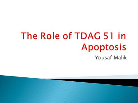 Yousaf Malik.  Mouse Embryonic Fibroblast (MEF) ◦ TDwt (cells containing the TDAG 51 gene) ◦ TDko (cells lacking the TDAG 51 gene)