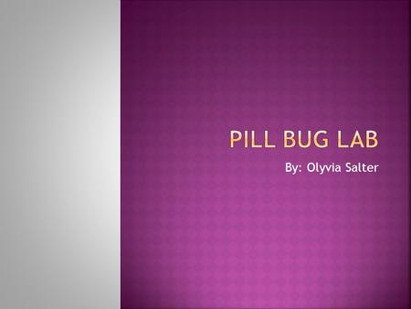 Pill Bug Lab By: Olyvia Salter.