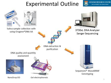 Saliva sample collection with using Oragene®DNA kit DNA extraction & purification Gel electrophoresis Experimental Outline DNA quality and quantity assessment.