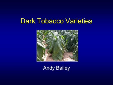 Dark Tobacco Varieties Andy Bailey. Dark Varieties Newer varieties: –Broader spectrum of disease resistance –More upright growth habit –Increased yield.
