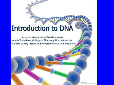 Introduction to DNA Lecture notes edited by John Reif from PPT lectures by: Image from  Natalia Tretyakova, College.