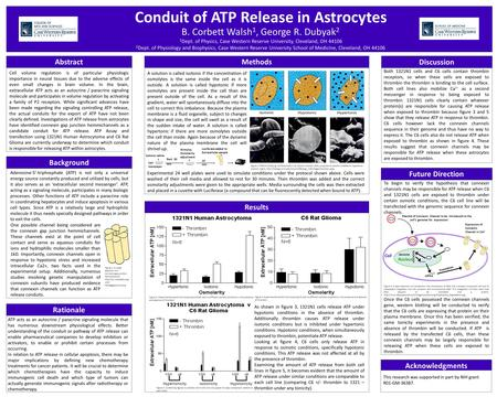 Conduit of ATP Release in Astrocytes Cell volume regulation is of particular physiologic importance in neural tissues due to the adverse effects of even.