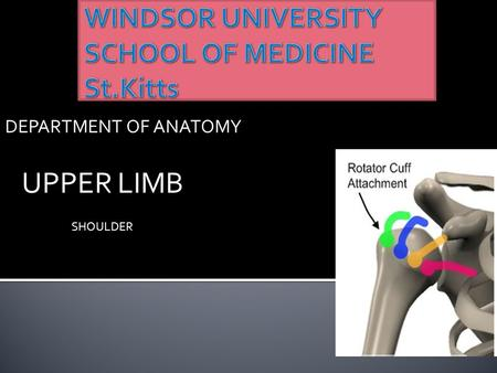 DEPARTMENT OF ANATOMY UPPER LIMB SHOULDER.  The shoulder is the region of upper limb attachment to the trunk and neck.