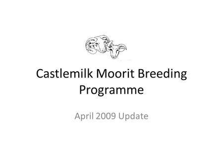 Castlemilk Moorit Breeding Programme April 2009 Update.