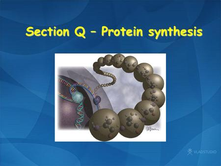 Section Q – Protein synthesis