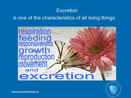 Www.juniorscience.ie Excretion is one of the characteristics of all living things.