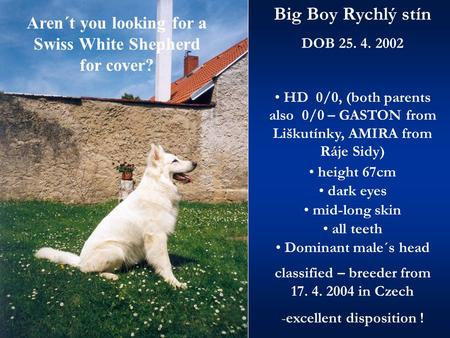 Aren´t you looking for a Swiss White Shepherd for cover? Big Boy Rychlý stín DOB 25. 4. 2002 HD 0/0, (both parents also 0/0 – GASTON from Liškutínky, AMIRA.