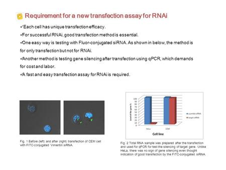 Requirement for a new transfection assay for RNAi Each cell has unique transfection efficacy. For successful RNAi, good transfection method is essential.