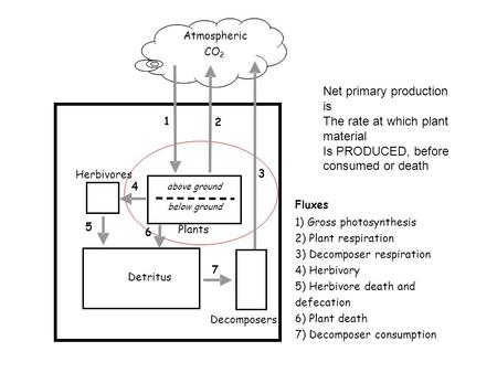 Net primary production is The rate at which plant material Is PRODUCED, before consumed or death Herbivores above ground Detritus Decomposers below ground.