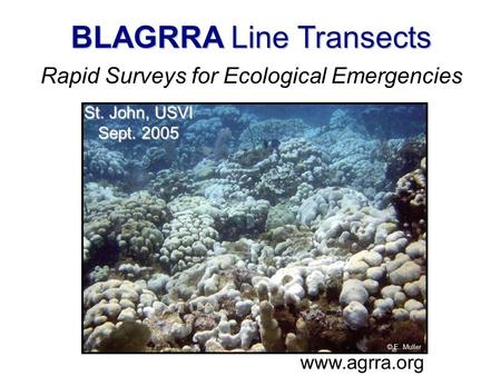 . BLAGRRA Line Transects Rapid Surveys for Ecological Emergencies www.agrra.org © E. Muller St. John, USVI Sept. 2005.