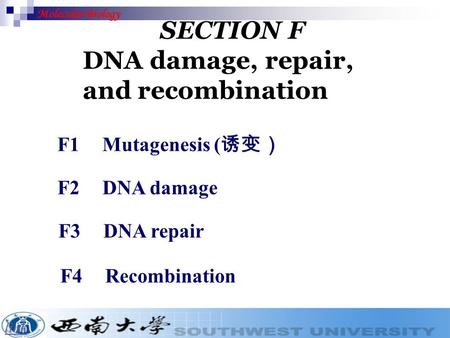Molecular Biology SECTION F DNA damage, repair, and recombination link F1 Mutagenesis ( 诱变) F2DNA damage F3 DNA repair F4Recombination.