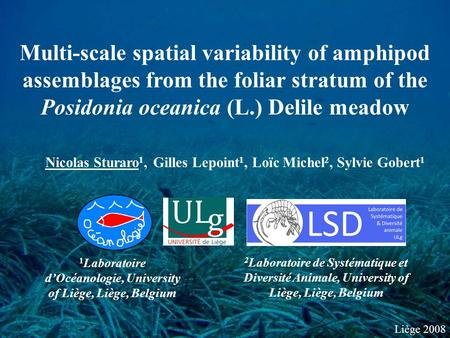 Liège 2008 Multi-scale spatial variability of amphipod assemblages from the foliar stratum of the Posidonia oceanica (L.) Delile meadow Nicolas Sturaro.